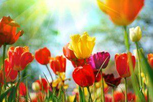 Plaatje voorjaarsmarkt