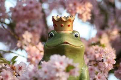 Prins kikker