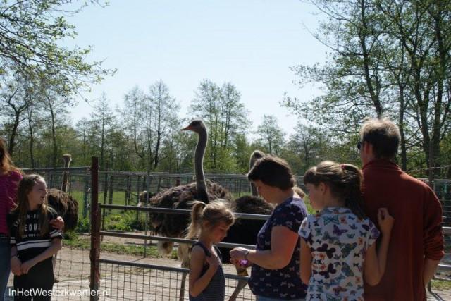 Parels westerkwartier-struisvogelboerderij