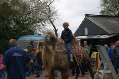 Ei ei 2014 ezelspark marum (1)