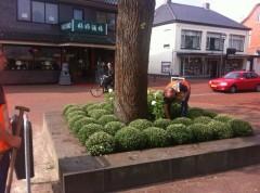 Stads groen zuidhorn