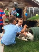 Opening konijnenbult  (1)
