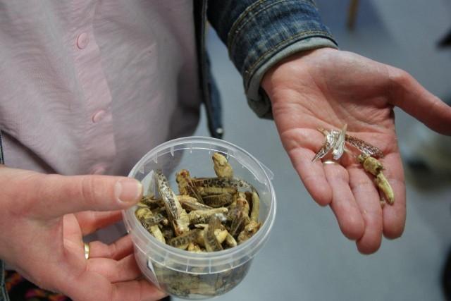 Sksg-insectenlesprogramma (6)