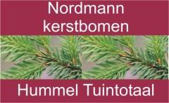 Nordmannbanner