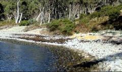 Abel-tasman-landingsplek