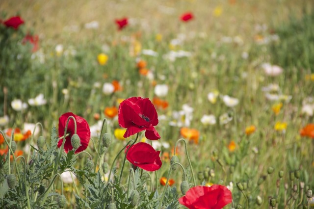 Bloemen-veld