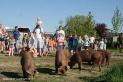 Waddenvarkens (10)