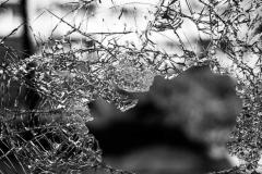 Ruit raam kapot
