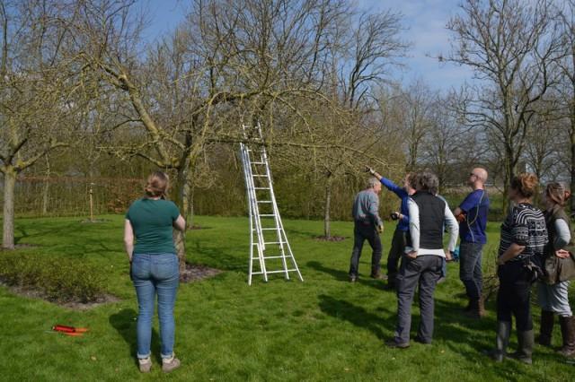 Workshops Snoeien fruitbomen & Aanleg boomgaard gaat van start