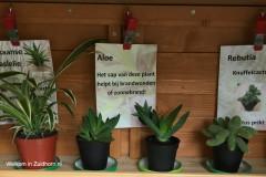 Cactussen (1)