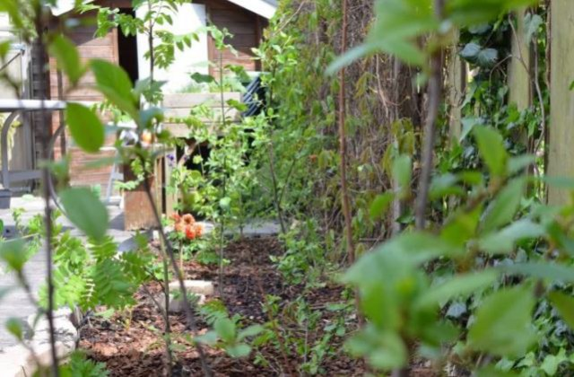 Tuiny forest foto energiepionier-klimaatadaptie
