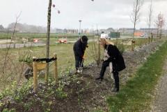 Wethouder geertje dijkstra-jacobi bij aanplant groen woonwijk oostindie leek