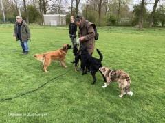 Hondengroep (5)